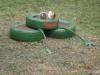 žaba v Doľnejsi